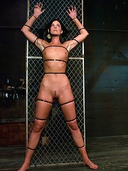 Two in a cage is worth morethan one with a shaved bush.